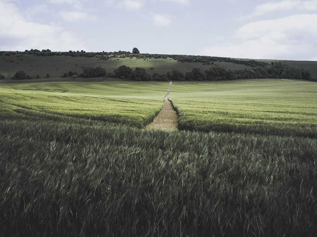 Get Off Screens: Fields - Matt Holland Photography
