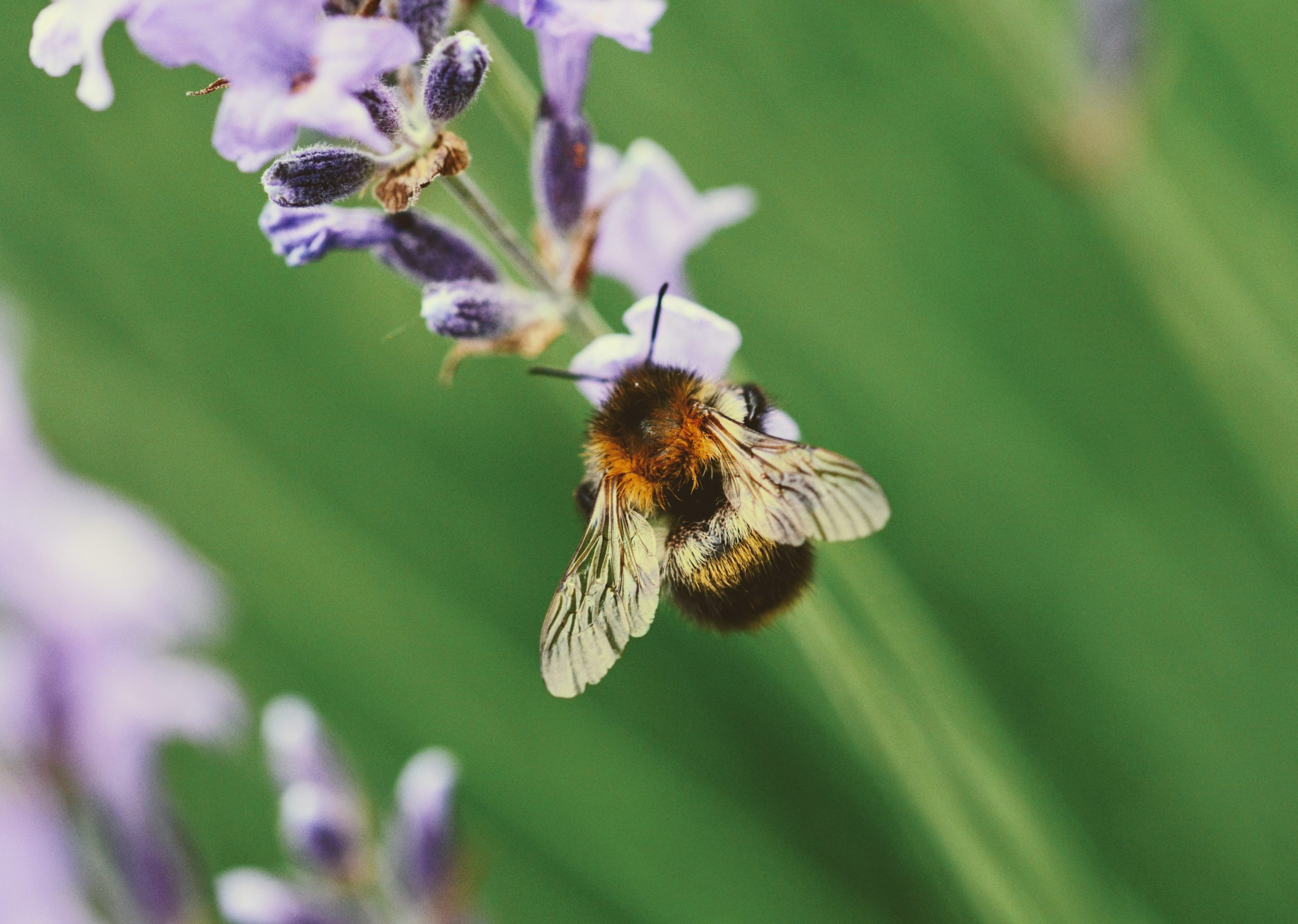 Bee the Change for Mental Health Week