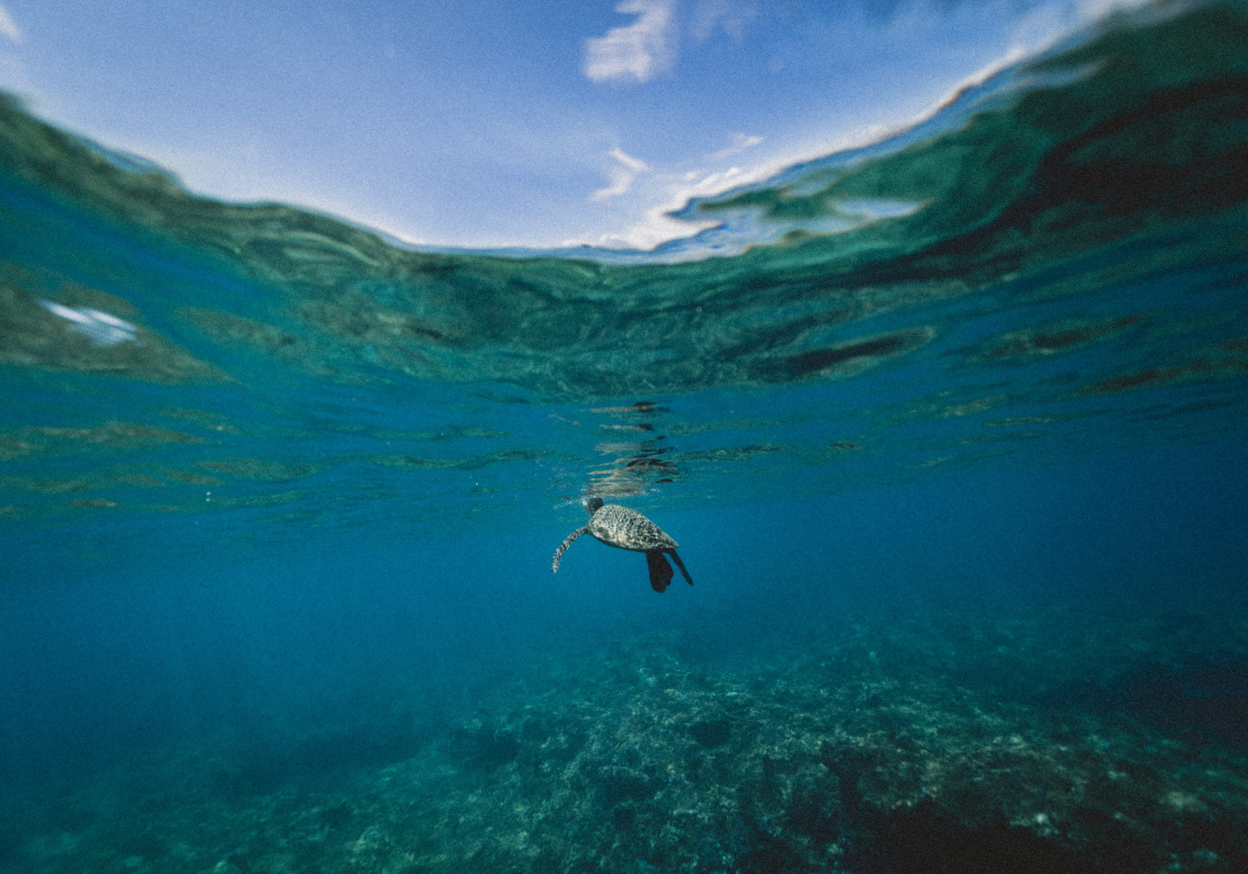 Get off screens for World Ocean Day